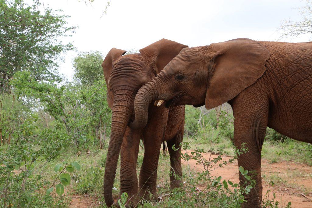 being-barsilinga-sheldrick-wildlife-trust-love-brand