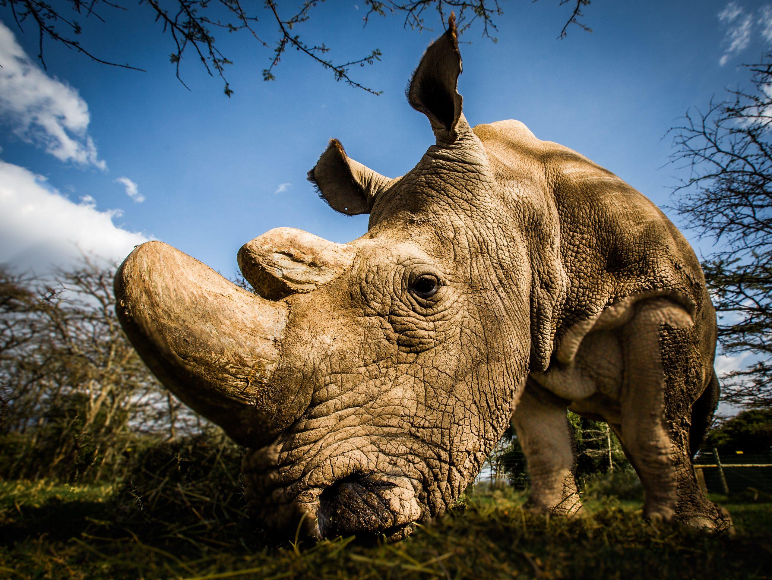 Rhino-c-WildAid-Andrew-Wegst